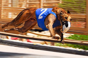 Greyhound-Kinloch-Brae