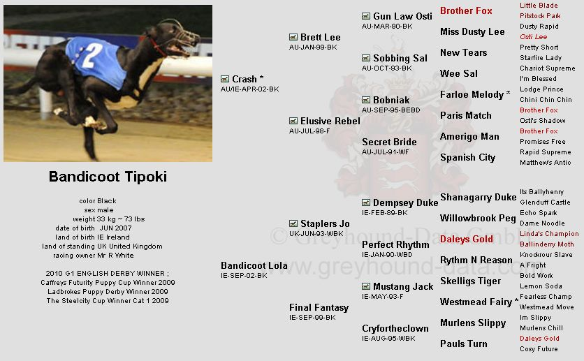 Bandicoot-Tipoki-greyhound-pedigree