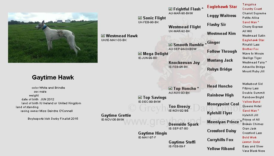 Gaytime-Hawk-greyhound-pedigree