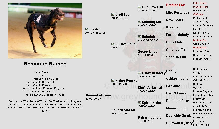 Romantic-Rambo-greyhound-pedigree