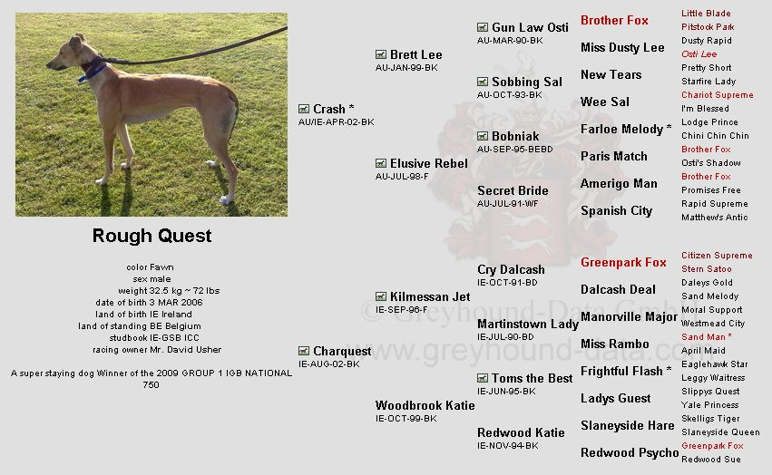 Rough Quest-greyhound-pedigree