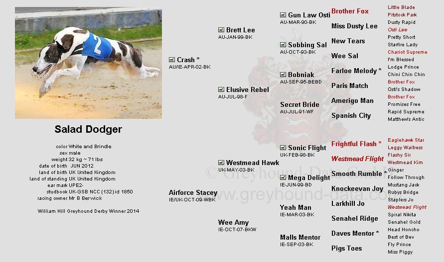 Salad-Dodger-greyhound-pedigree