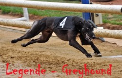 Legende-Greyhound