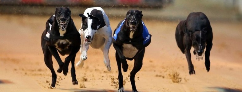 clares-rocket-greyhound